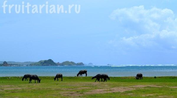 lombok-klimat