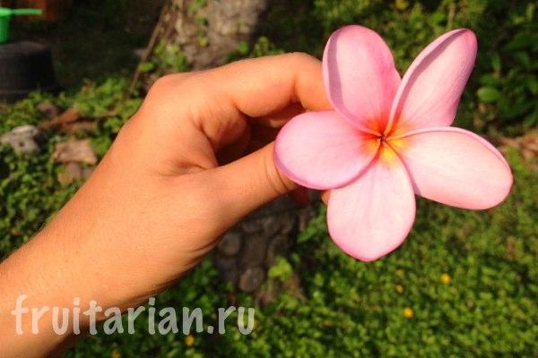 fruitarian-valentina2