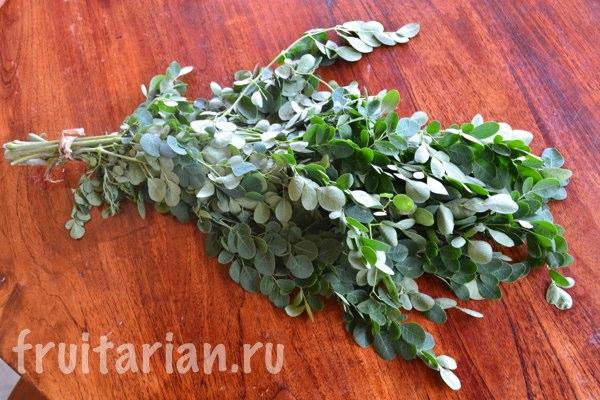 moringa-daun-kelor
