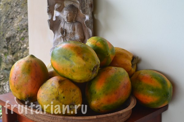 papaya-lombok