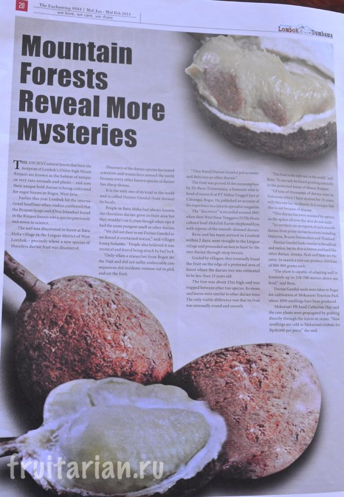 bald-durian-gundal-lombok-jawa