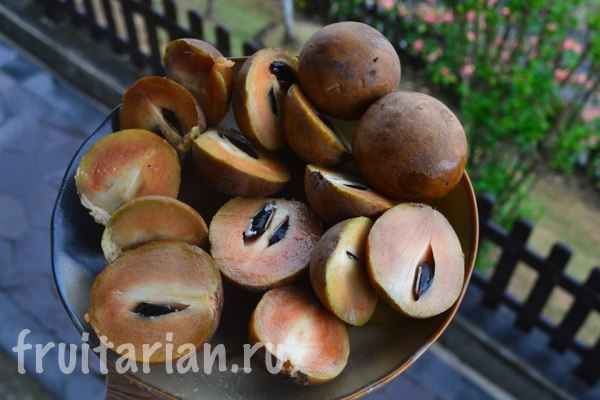 sapodilla-indonesia1