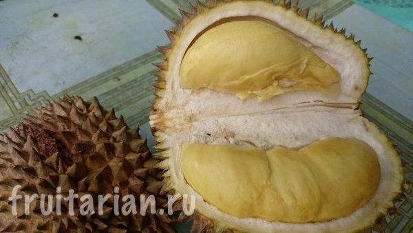durian-darrick1