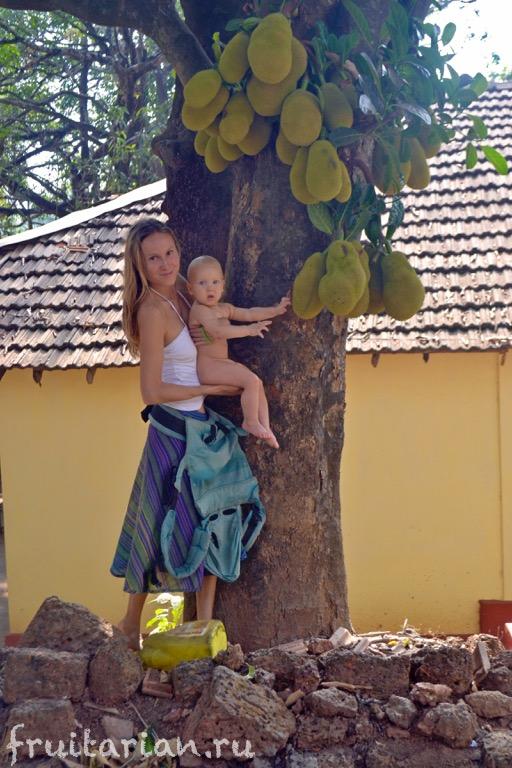 jackfruit-india